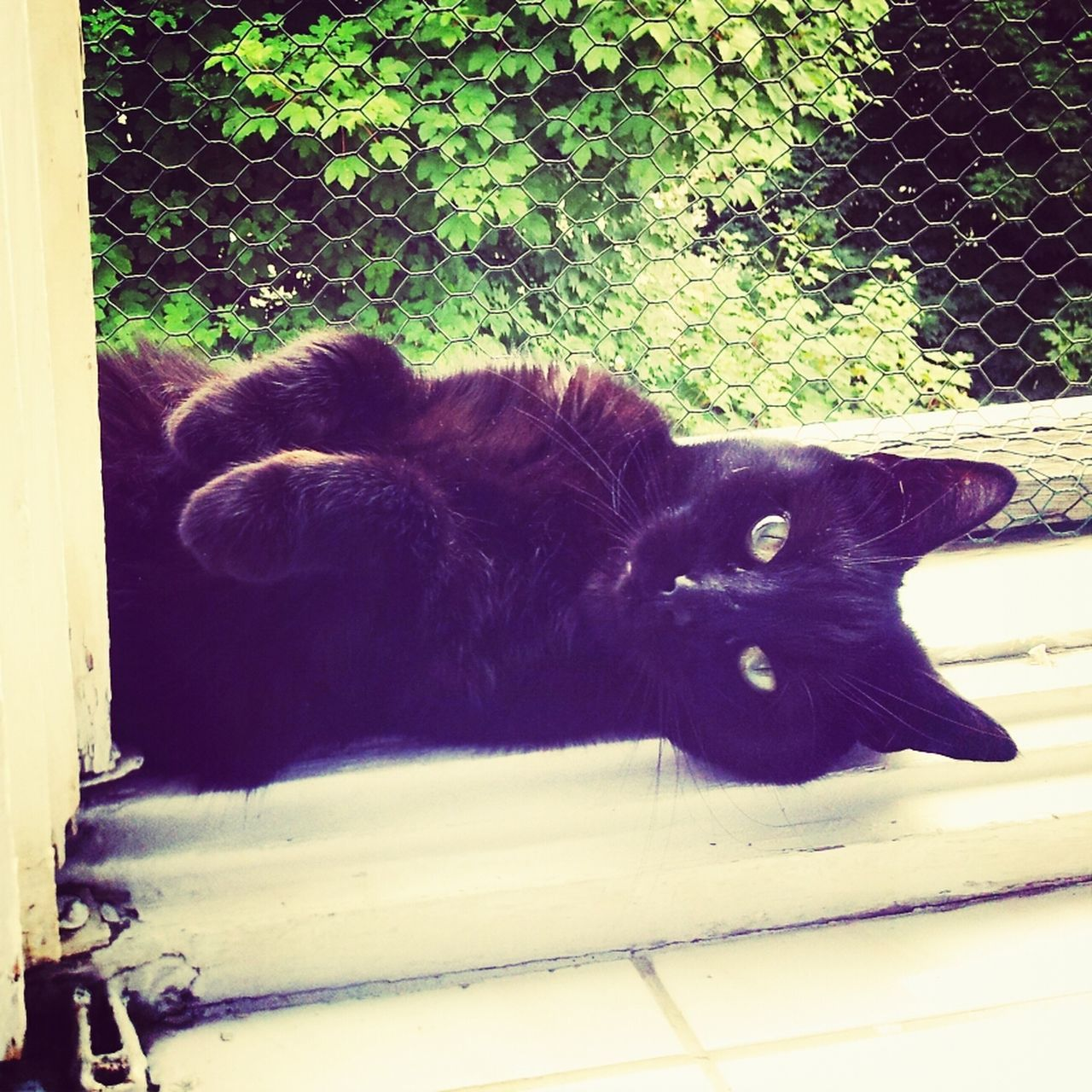 Portrait Of Black Cat Lying Against Fence
