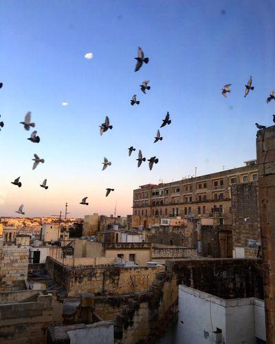 Valletta skyline. Flyby Sunset Valletta Malta