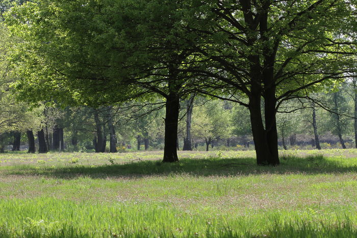 Bäume Green Green Color Heidelandschaft Tree Trees Wahner Heide Weide Weidelandschaft Baum Beauty In Nature Day Field Grass Growth Heide Landscape Meadow Nature No People Outdoors Scenics Summer Tranquil Scene Tranquility
