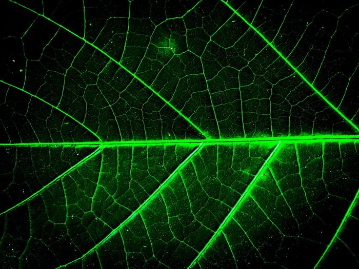 Full frame shot of illuminated leaf against black background