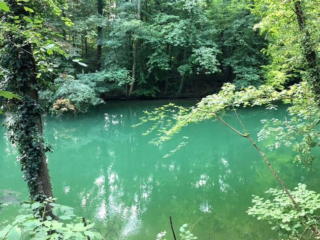 Green water at the River Isar, Isarauen, Trinkwasser, Paradies, Erholung, Forest Munich River Water Plant Tree Nature Day Green Color Lake Beauty In Nature Tranquility Sunlight No People Reflection Outdoors Forest Scenics - Nature