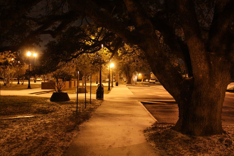 Natural Beauty Sidewalk Beauty In Nature Branch Illuminated Light Snow Nature Night No People Outdoors Tree Tree Trunk