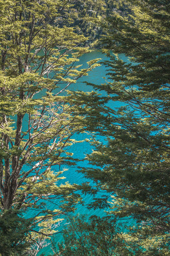 Plant Tree Day Water Nature No People Beauty In Nature Growth Tranquility Outdoors Forest Backgrounds Lake High Angle View Scenics - Nature Blue Tranquil Scene Reflection Sunlight Coniferous Tree Clean Turquoise Colored