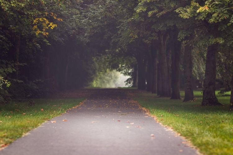 Early morning foggy path Landscape_Collection Taking Photos Early Morning Foggy Morning