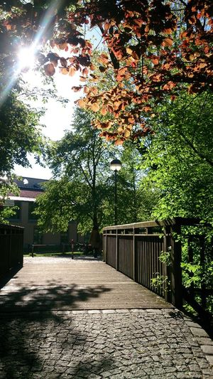 Footpath amidst trees and buildings during sunny day