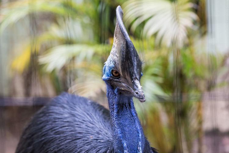Durante uma visita ao Zoológico de Pomerode, surgiu a oportunidade de fazer este clic. Animal Themes Animal Wildlife Bird Close-up Day Nature No People One Animal Outdoors