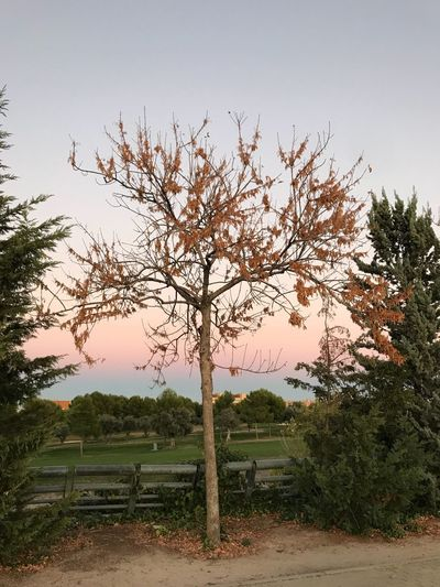 Autumn Tree Beauty In Nature Tranquility Branch Nature Sky Clear Sky Sunset Pink Sky Park Juan Carlos I Madrid Spain Scenics Tranquility