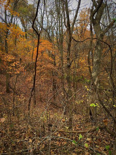 Untamed Untamedamericas Autumn Autumn Colors
