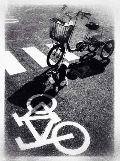 IPhone5 Blackandwhite Dog Bicycle