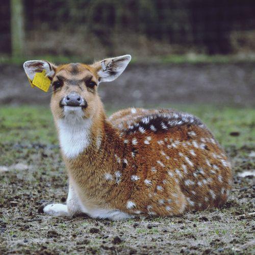 Oh Deer :)) at Westmidlandssafari Eyem Nature Lovers  Nature