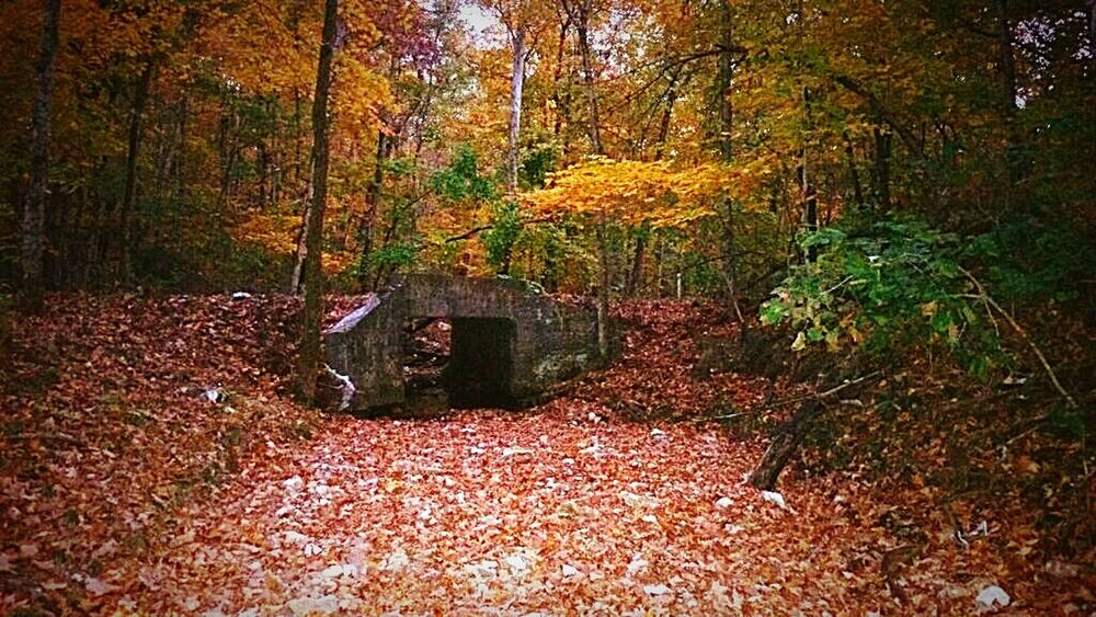 Fall Colors Fall Autumn Colors Forest Small Bridge In The Woods Dried Up Creek Taking Photos