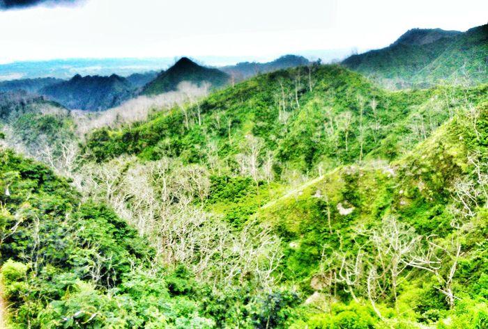 Open Edit Nature Kelud Mountain Hugging A Tree Popular Photos Popular Beautiful Nature