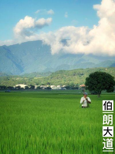 伯朗大道 Taidong, Taiwan Paddy Field Sunset 伯朗大道 Plant Green Color Sky Beauty In Nature Land Nature Cloud - Sky Field Growth Landscape Scenics - Nature Day Grass Tranquility Mountain Tranquil Scene Tree Environment Agriculture Communication