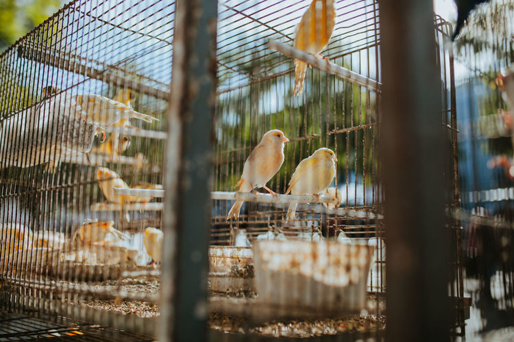 Birds perching in cage