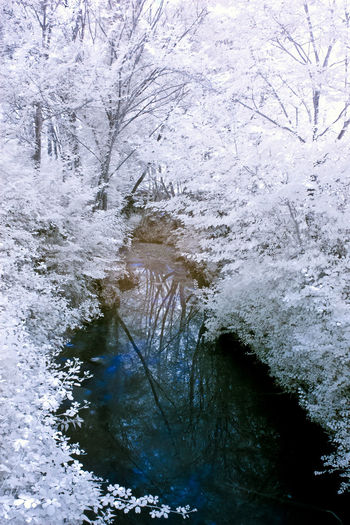 Scenic view of river flowing in forest during winter