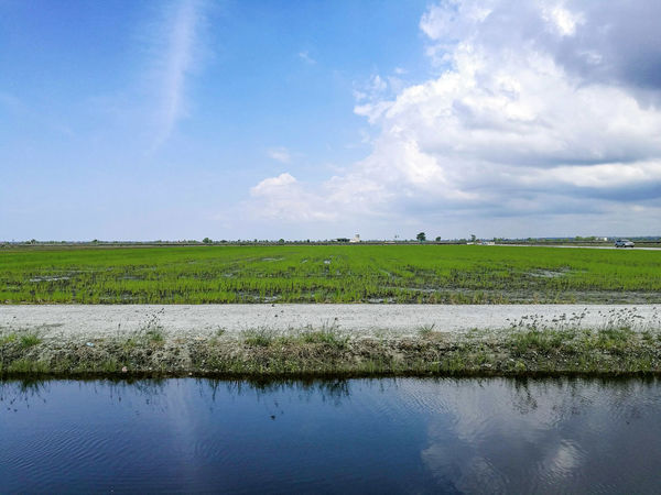 Paddy Field Reflection Sky Landscape Water Cloud - Sky Green Color Nature Agriculture Day Scenics No People Freshness Outdoors Paddy Sekinchan, Malaysia Sekinchan Nature Photography Nature_collection Relaxed
