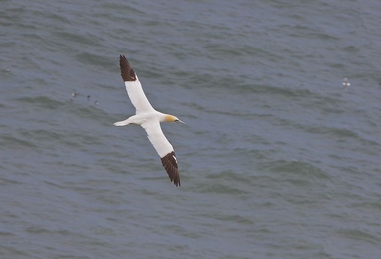 Low angle view of seagull flying over sea