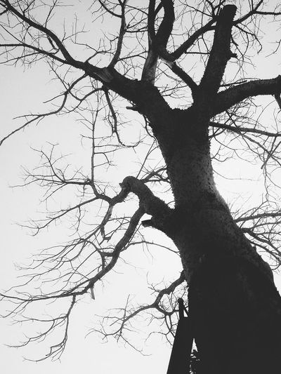 Lonely Tree Noir Nature