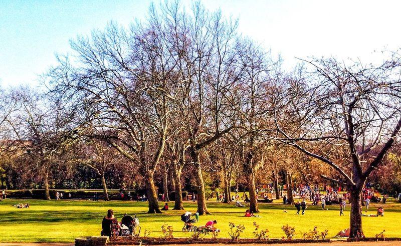 Dia de sol é assim em Londres. #byandrearochael Tree Grass Green Color Park - Man Made Space Outdoors Nature