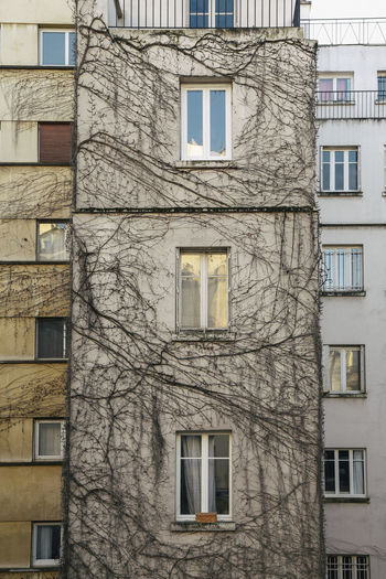 Building Exterior Built Structure Architecture Window No People Building Residential District Outdoors Day Full Frame Nature Tree Low Angle View City Backgrounds Bare Tree Old Pattern Apartment Plant Luxury Autumn Mood