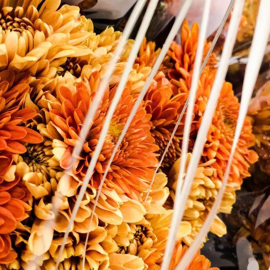 Autumn and Mums Chrysanthemums Flower Photography Flowers Orange Color Mums Petal Flower Head Autumn Bouquet Flower Market Close-up