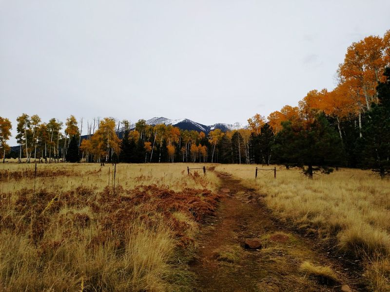 Crisp autumn air and snow topped mountains. Flagstaff Arizona Hometown Pride Mothernature Mountains Aspens