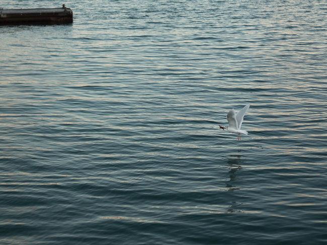 Animal Themes Animal Wildlife Bird Nature No People One Animal Sea Water Waterfront