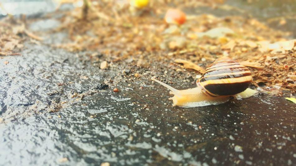Snail Snail🐌 Snailshell Snail Photography Rain Concrete Raindrops Raining Day Raining Snails Snail Shells IDK Idk What I Was Doing Idk What To Caption This Idk Lol Random