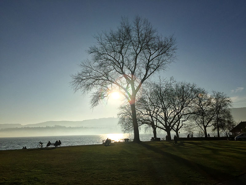 Beauty In Nature Calm Lake Lakeshore Silhouette Solitude Sun Sunlight Sunny Tranquil Scene Tranquility Tree Tree Water