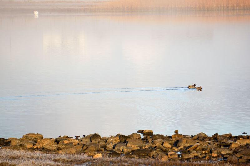 Calm Cold Ducks Loch  Nature Non-urban Scene Peaceful Peaceful View Scenics Solitude Tranquil Scene Tranquility Water