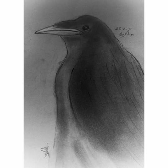 Karakalem Crow Karga Drawing ✏