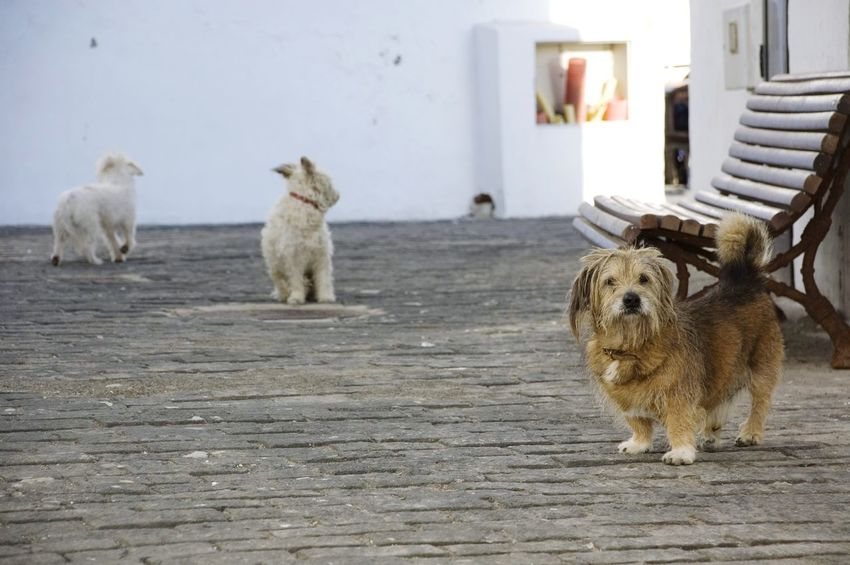Three dogs No People Pets Fuerteventura Dog Family CanineCuteness Canine Friends Canine Photography Canine Family Friends For Life  Friendship Friends Wild Dogs No Owner Furry Friends Pack Of Dogs Dogs Three Dogs 3 Dogs Emotions Sadness Snout Cute Dog  Caring Love EyeEmNewHere