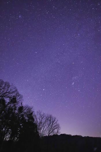 枝のシルエットが好き😆 銀河鉄道の夜♪ Astronomy Galaxy Space Milky Way Tree Star - Space Constellation Astrology Sign Star Field Silhouette