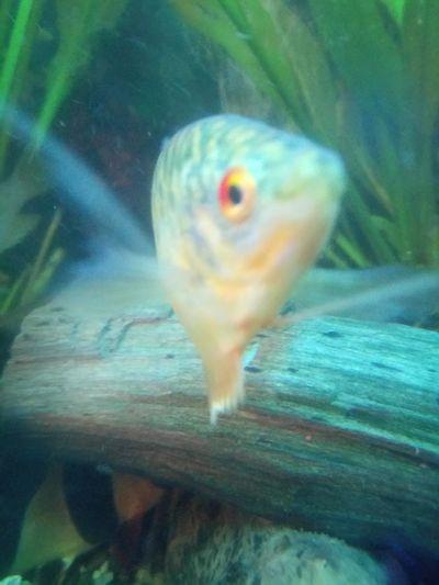 UnderSea Sea Life Swimming Water Underwater Aquarium Goldfish Sea Fish Animal Fin
