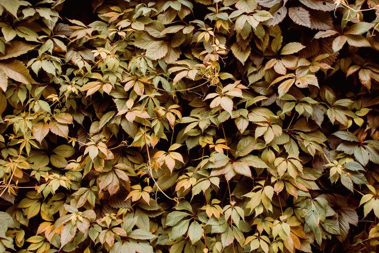 Full frame shot of autumnal leaves on field