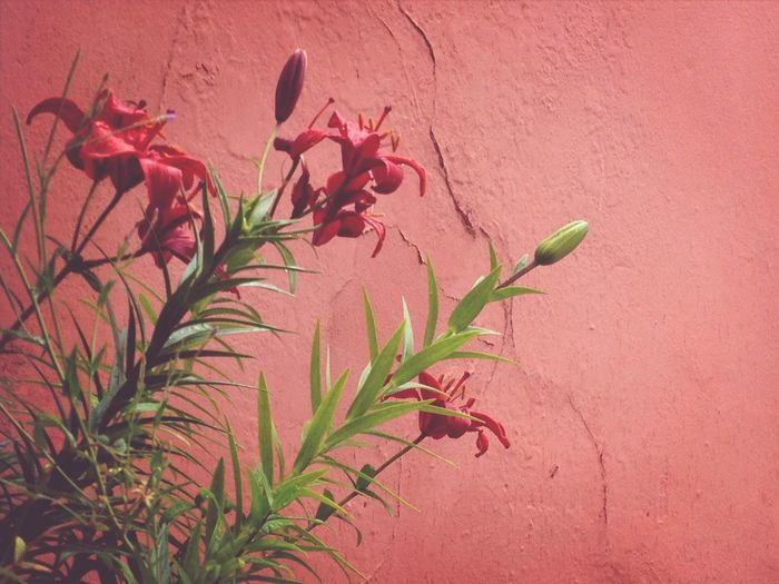 Backyard flowers Taking Photos