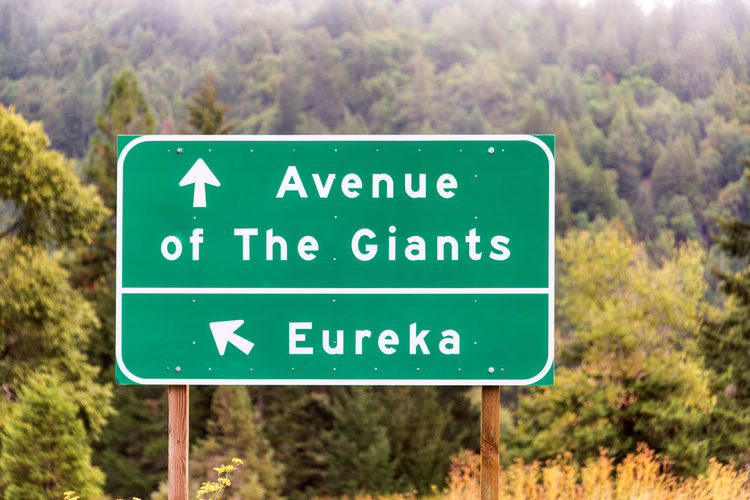 Highway sign for Eureka and the Avenue of The Giants near Humboldt Redwoods State Park in California California USA America Redwoods Redwood Redwood Trees Redwood Forest Travel Travel Destination Tourism Plant Nature Day Outdoors Landscape Humboldt Redwoods State Park Sign Western Script No People Information Guidance Tree Text Forest Tree