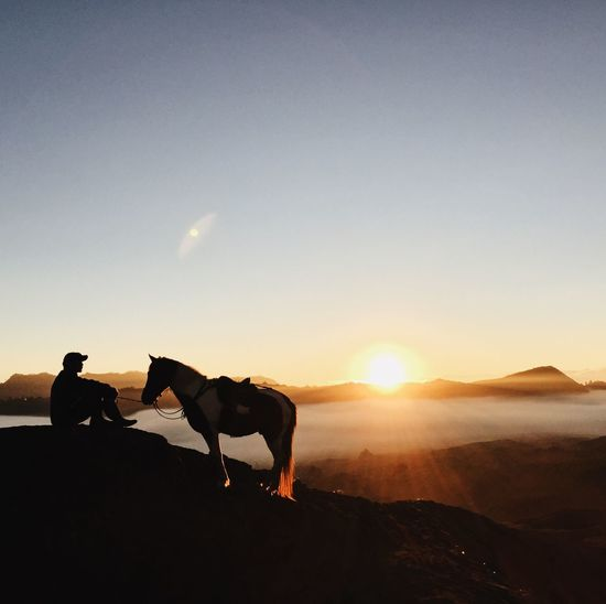 sunrise with horse Horse Sky Mammal Domestic Animals Sunset Domestic Sunlight Land Nature Pets One Animal Real People Sun Silhouette Vertebrate Leisure Activity Beauty In Nature Men People Lens Flare Outdoors
