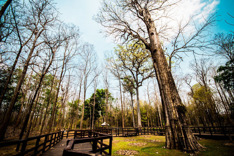The Biggest Teak Tree Of The World. Beauty In Nature Branch Day Forest Land Outdoors Teak Tree The Biggest Tree WoodLand