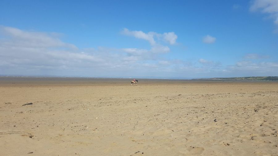 People Photography Sky And Clouds Sky Landscape Scenic Beach Beach Photography Sand Sea Seaside Horse
