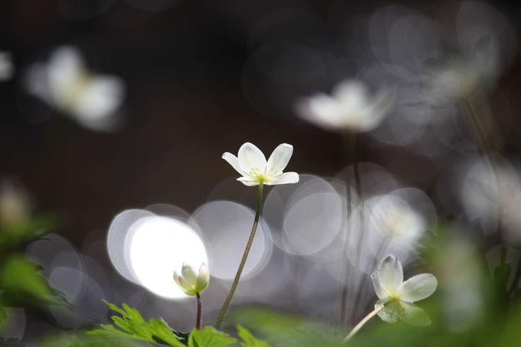 天気は☔っぽいけど気持ちはキラキラで✨ Beauty In Nature キラキラ *CHIE* EyeEm Nature Lover EyeEm Flower 玉ボケ Nature EyeEm Gallery EyeEm Best Shots Nature Photography Noedit Nofilter 今日も張り切って😆おはよう~