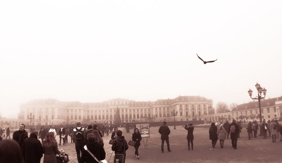 Wien IN WIEN Chrisrmasmarket Chrismas Market Schönbrunn Palace Bird Birds Bird Photography Birds In Flight Birds Of EyeEm  Birds_collection Birds🐦⛅