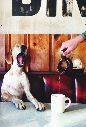 Dog Morning Coffe