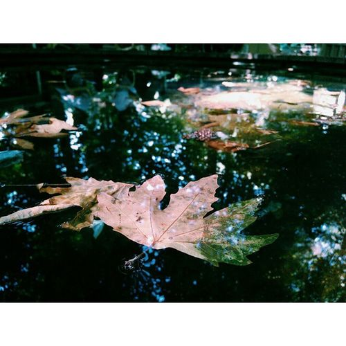 InstaMagAndroid Nature Naturelover VSCO vscoturkey vscocam vscocamturkey