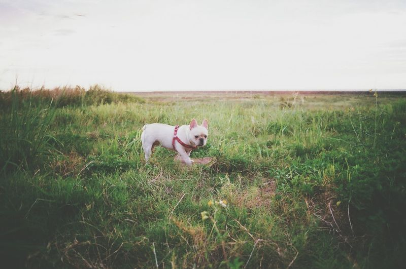 What Does Freedom Mean To You? Taking Photos French Bulldog Dog Getting Inspired The Five Senses Doglover Dogs Playing With The Animals Secret Garden 鐵蛋 Wildlife Photography Millennial Pink Long Goodbye Pet Portraits