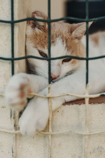 Close-up of a cat in cage