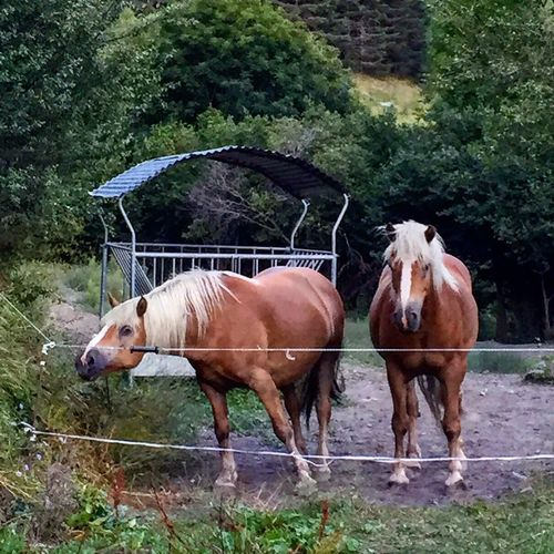 Horsesofinstagram Nature_collection Domestic Animals