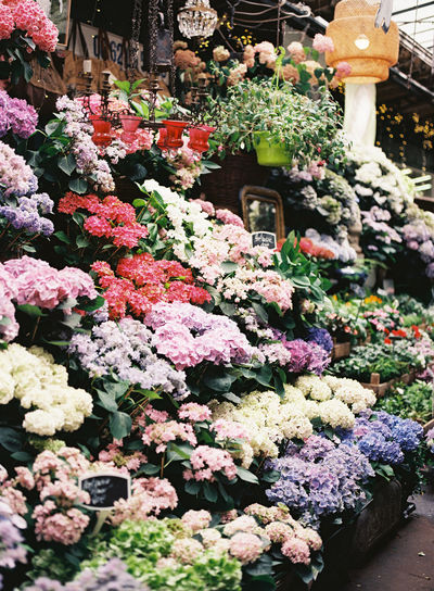 Image taken in June of 2018 with 120 fuji film. Found floral market in the middle of Paris. Owner had a love for hydrangeas. France Hydrangea Paris Paris, France  Abundance Arrangement Beauty In Nature Film Photography Flower Flower Market Flower Shop Flowering Plant For Sale Fragility Freshness Growth Market Multi Colored No People Plant Retail  Retail Display Variation Vulnerability