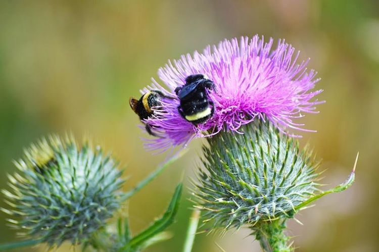 Flower, Bee Beauty In Nature Insect Invertebrate Close-up Animal Wildlife Animals In The Wild Bee
