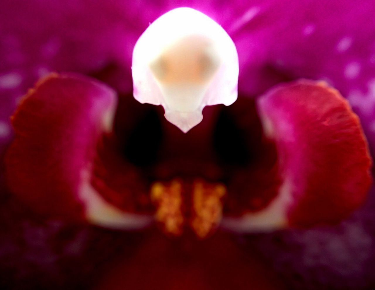 petal, close-up, beauty in nature, nature, fragility, flower, no people, flower head, freshness, outdoors, day, undersea